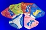 Детские трусы для девочек COOL KID арт. 1072 (2043,8153)